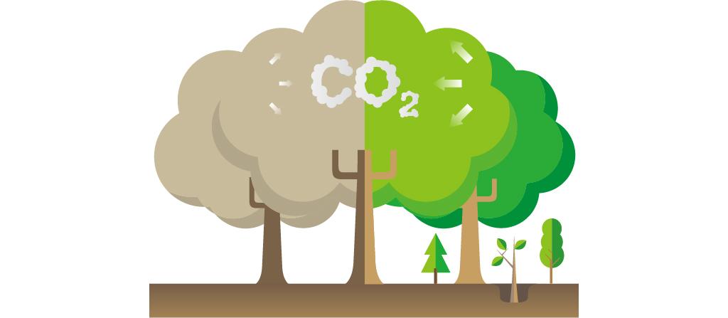 人間と同じように、生きていくために呼吸をする森林